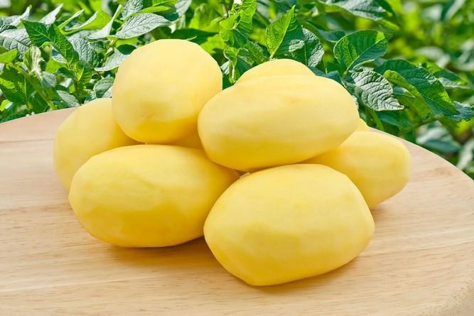 выбор картофеля
