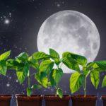 лунный календарь на май 2020